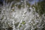 서울숲의 봄