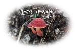 불암산 야생버섯, 2015 여름