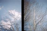 diana mini_ 양재시민의숲