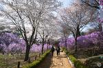 부천 원미산으로 봄마중 가다