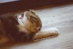 대전 둔산동 고양이 카페☞ 나른나른한 일상엔 언제나 고양이