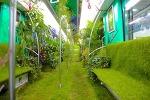 항저우 테마열차 - 산림욕, 힐링, 녹색산림 열차 운행