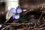 천마산 야생화, '17년 3월 이른봄