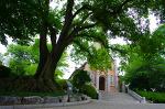 아산 공세리성당, 거목들에 둘러싸인 아름다운 성당.