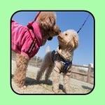 강아지 여름철 야외 활동 대비 5가지