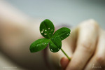 [스냅] 행운을 나눠드려요~  네잎클로버