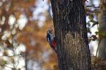 안산 해오라기근린공원의 산새들