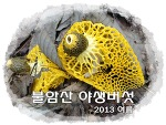 불암산 버섯, 2013 여름
