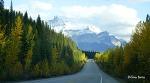 세상에서 가장 아름다운 길, 아이스필드 파크웨이 <캐네디언 로키 3>