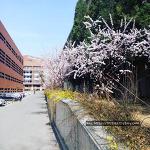 중국 MBA : 졸업논문 발표