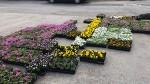 마을 꽃길을 만들었습니다