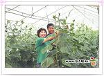 [충남/천안]봉황52농장