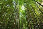 대나무의 강함과 온유함