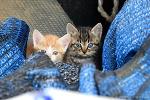 귀여운 길고양이 새끼, 제비, 고향 풍경