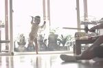 날렵한 아기의 점프 공격