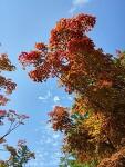 시작하는 가을 풍경 - 곤지암 리조트 화담숲
