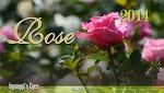 Rose 2014 장미 몇 송이