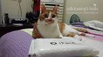 [장현아 작가] 장현아 작가의 갤노트3 iFace 케이스 후기입니다.