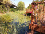 안산수인선 금개구리 생태공원 방문기