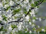 2016년 봄철 식재료 정리3탄 ( 나무나물,산나물, 봄채소, 봄해산물)