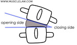 카이로프랙틱(chiropractic) 제2부