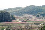 복숭아꽃 핀 마을