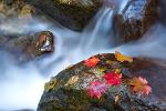 가을속으로2...
