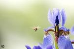 양평 세미원, 물과 꽃의 정원