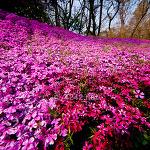 잔디꽃동산