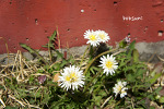 영월 황토방 - 꽃