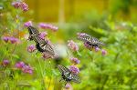인천나비공원, 나풀나풀 살아있는 아름다운 나비랑 놀아보자