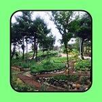 속초 여행 가 볼만한 곳 '설악산 자생 식물원'