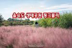 부산 을숙도 생태공원 핑크뮬리, 핑크빛 가을이 다가왔다