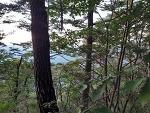 송이버섯 능이버섯 자생지 풍경 산원초