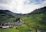 말레이시아, 말레이 반도의 알프스 - 카메론 하이랜드(Cameron Highlands) 2