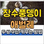 장수풍뎅이 애벌레 키우기 첫 이야기 (먹이, 수명, 키우는 방법)