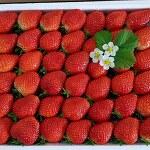 #딸기따기체험 새싹돋아나는봄 나들이와서 딸기 체험 하기 딱 좋으네요~!^^