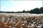 ( 대구 가을에 갈만한곳 )은빛 억새가 보기 좋은 대명 유수지-맹꽁이 생태 탐방로