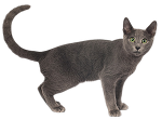 고양이 투명 배경  png 이미지