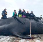 알라스카 가을 고래사냥 시즌