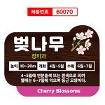 벚나무 수목표찰 텃밭이름표 60070