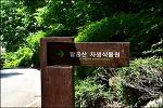 ( 대구 갈만한곳 ) 팔공산 자생 식물원
