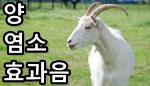 양/염소 울음소리 효과음 mp3 다운로드