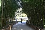 ( 울산 여행 ) 태화강 국가정원 십리대숲 ( 십리대밭 )
