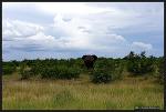 [남아공 로드트립 ④] 크루거 국립공원