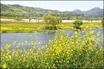 금호강변 걷기-산격대교->팔달교