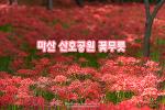 마산 산호공원 꽃무릇, 고운 붉은빛으로 물든 가을