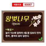 수목표찰 왕벚나무 식물이름표 60067