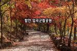 함안 입곡군립공원 붉게 물든 단풍 터널
