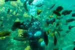 제주도 잠수함에서 바라본 풍경